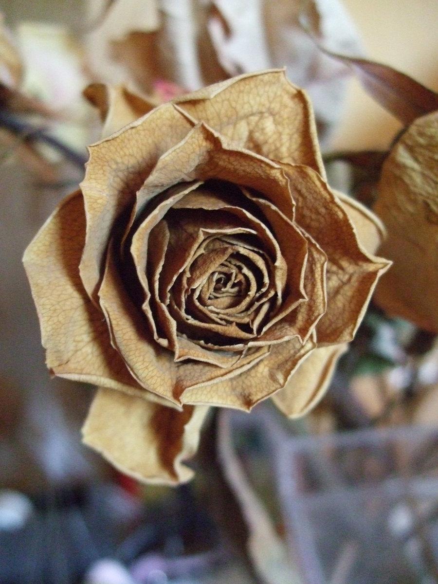 trandafir uscat