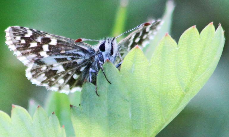 fluturi-schimbari-climatice